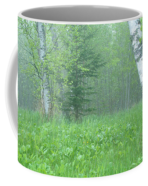 Landscape Coffee Mug featuring the photograph Silent Birch by Bill Morgenstern