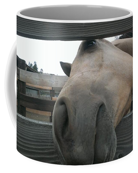 Horse Coffee Mug featuring the photograph Silly Horse by LKB Art and Photography