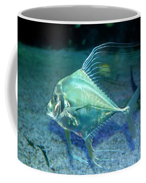 Aqua Coffee Mug featuring the photograph Silver Fish by Svetlana Sewell