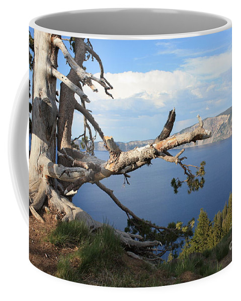 Crater Lake Coffee Mug featuring the photograph Silvery Tree Over Crater Lake by Carol Groenen