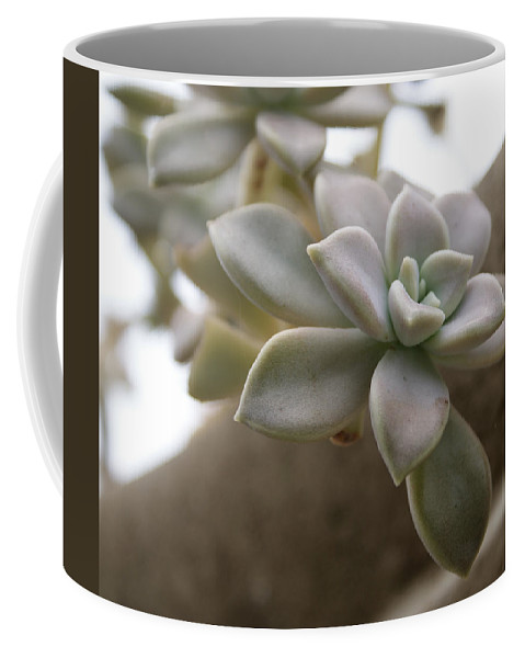 Cactus Coffee Mug featuring the photograph Simple Beauty by Jean Haynes