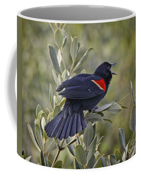Red-winged Blackbird Coffee Mug featuring the photograph Sing Me A Song, Red-winged Blackbird by TN Fairey