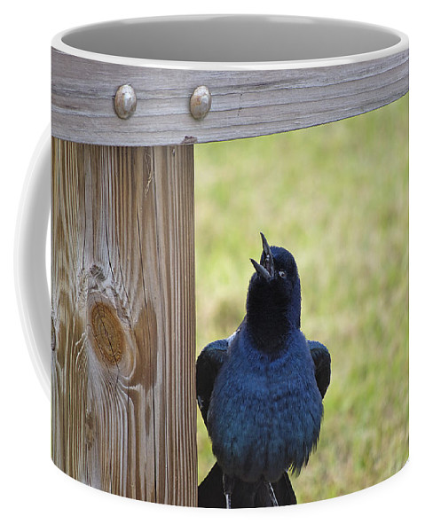 Grackle Coffee Mug featuring the photograph Singing Grackle by Kenneth Albin