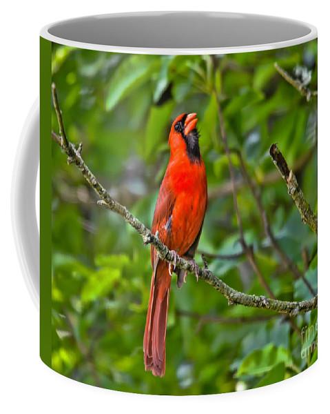 Northern Cardinal  Coffee Mug featuring the photograph Singing His Song by Kerri Farley