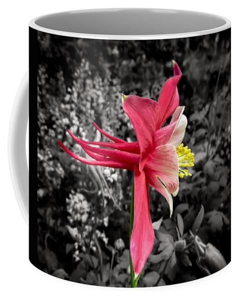 Aquilegia Coffee Mug featuring the photograph Single Columbine Profile by Dawn Key