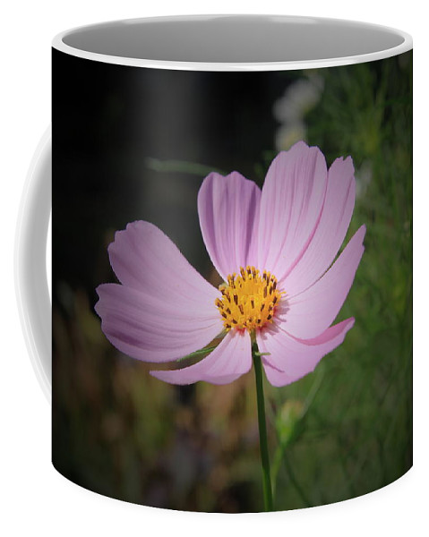 Pink Cosmos Floral Coffee Mug featuring the photograph Single Cosmos by Kathleen Sartoris