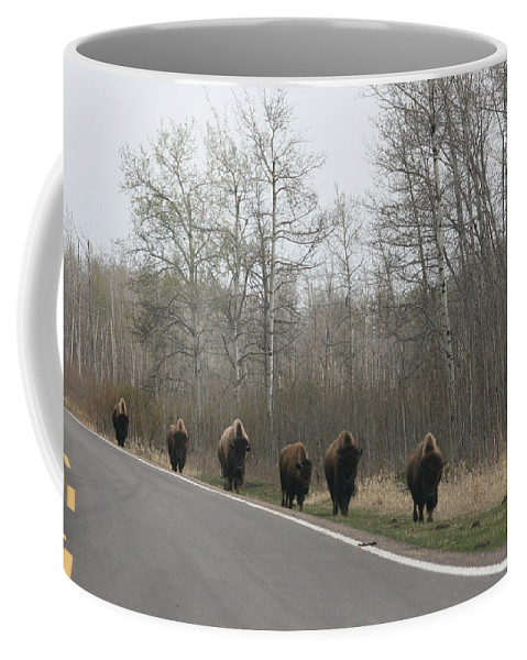 Buffalo Bison Herd Roaming National Park Edmonton Ab Elk Island Coffee Mug featuring the photograph Single File Now by Andrea Lawrence