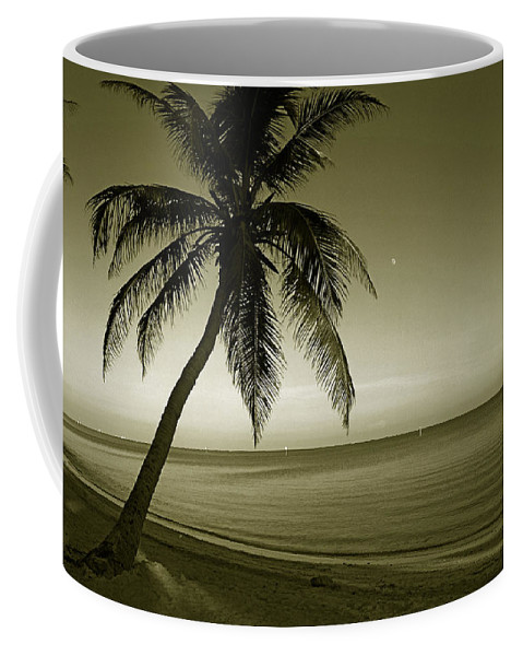 Palm Tree Coffee Mug featuring the photograph Single Palm At The Beach by Susanne Van Hulst