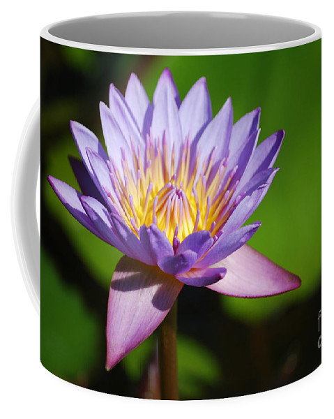 Nymphaea Coffee Mug featuring the photograph Single Purple Water Lily Number One by Heather Kirk