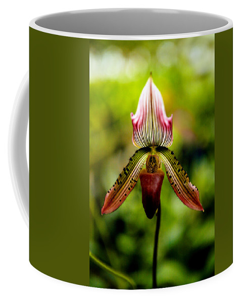 Orchid Coffee Mug featuring the photograph Singular Beauty by Marilyn Hunt
