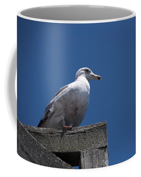 Dock Coffee Mug featuring the photograph Sitting By The Dock Of The Bay by Steven Natanson