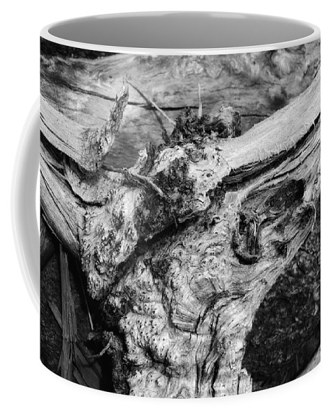 Wood Coffee Mug featuring the photograph Skull by Donna Blackhall
