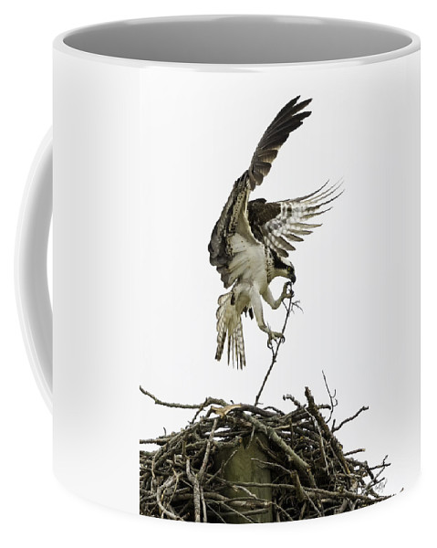 Osprey Coffee Mug featuring the photograph Sky Ballet by Everet Regal