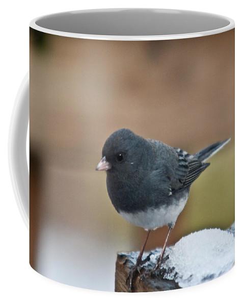 Coffee Mug featuring the photograph Slate Colored Junco In Snow by Douglas Barnett