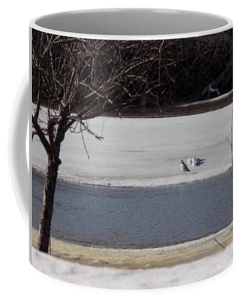 Caribou Mill Pond Coffee Mug featuring the photograph Sleeping Seagulls by William Tasker