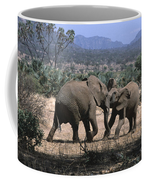 Elephants Coffee Mug featuring the photograph Slight Disagreement by Sandra Bronstein