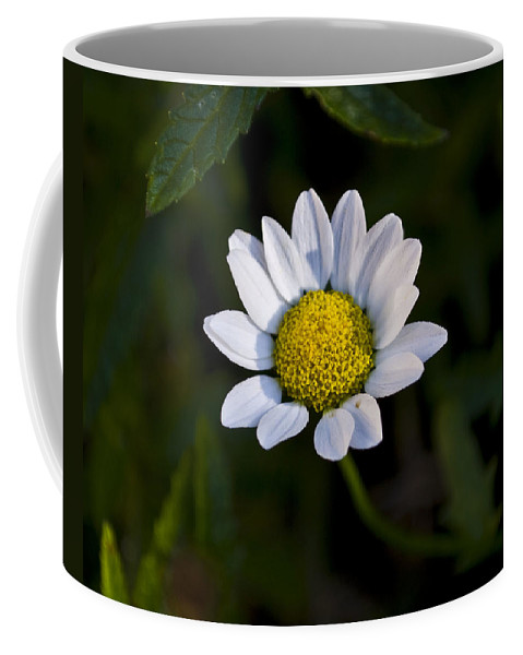 Flowers Coffee Mug featuring the photograph Small Daisy by Svetlana Sewell