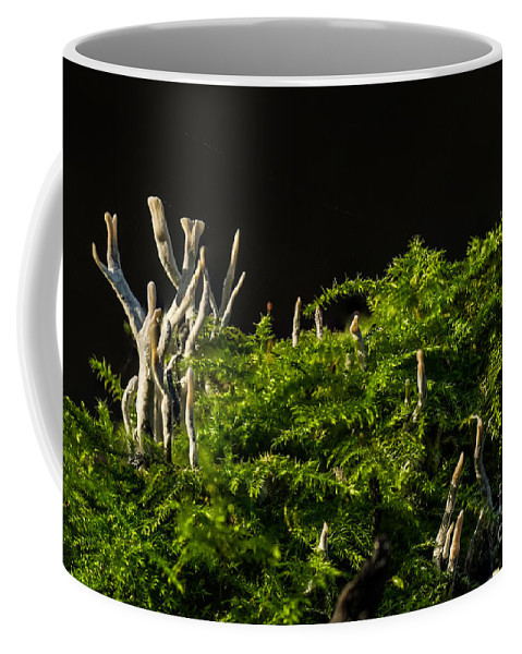Close-up Coffee Mug featuring the photograph Small Forest by Brothers Beerens