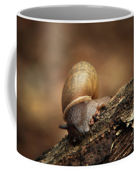 Snail Photographs Coffee Mug featuring the photograph Small Wonder by Kim Henderson