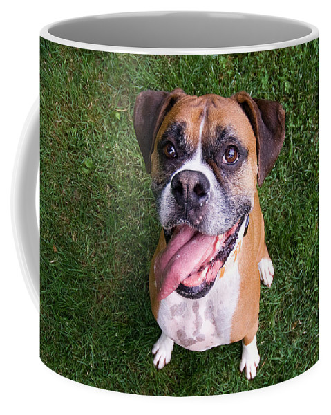 Boxer Coffee Mug featuring the photograph Smiling Boxer Dog by Stephanie McDowell