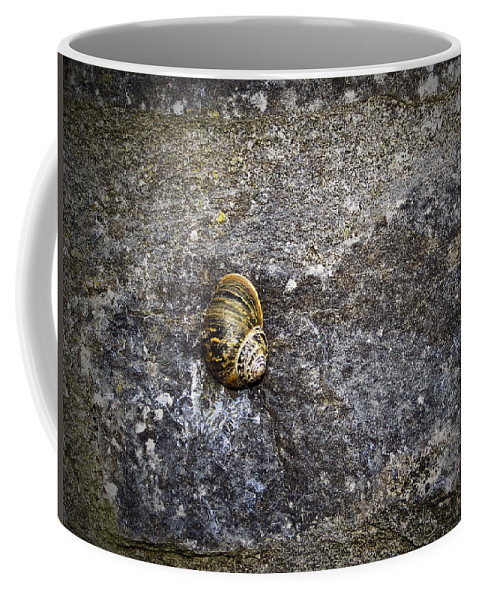 Irish Coffee Mug featuring the photograph Snail At Ballybeg Priory County Cork Ireland by Teresa Mucha