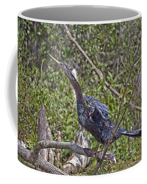 Snakebird Coffee Mug featuring the photograph Snake Bird by Kenneth Albin