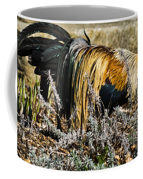 Chicken Coffee Mug featuring the photograph Sneeking Rooster by Douglas Barnett