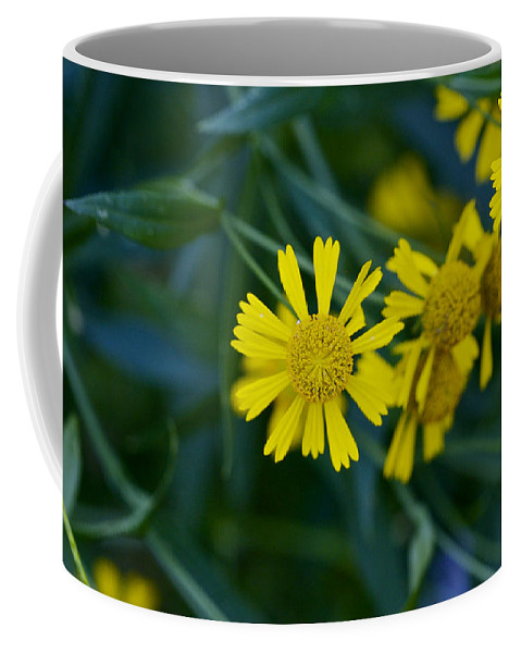 Abstract Coffee Mug featuring the photograph Sneezeweed by Jack R Perry