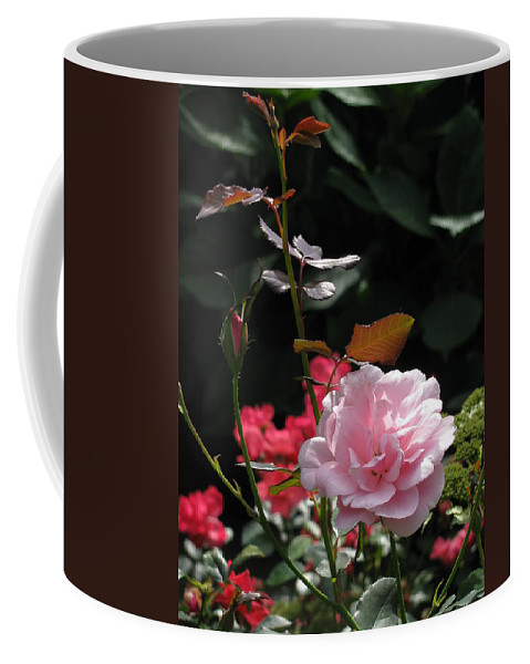 Flower Coffee Mug featuring the photograph Sniff - Tea Rose by Deborah Crew-Johnson