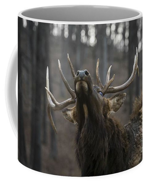 Bull Coffee Mug featuring the photograph Snooty by Andrea Silies