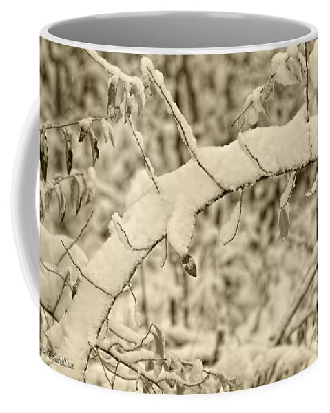 Snow Coffee Mug featuring the photograph Snow Arch by LeeAnn McLaneGoetz McLaneGoetzStudioLLCcom