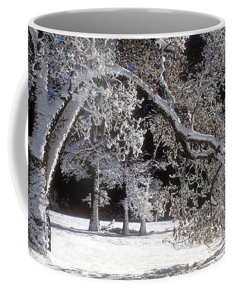 Black Oak Coffee Mug featuring the photograph Snow Covered Black Oak Yosemite National Park by Dave Welling
