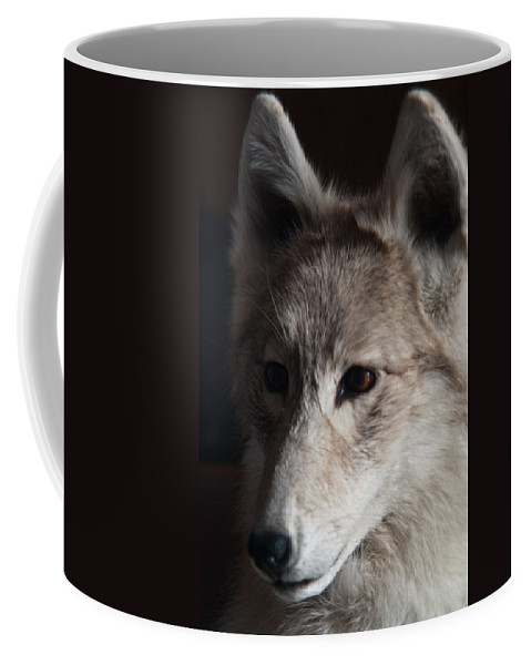 Snow Coffee Mug featuring the photograph Snow Coyote by Douglas Barnett