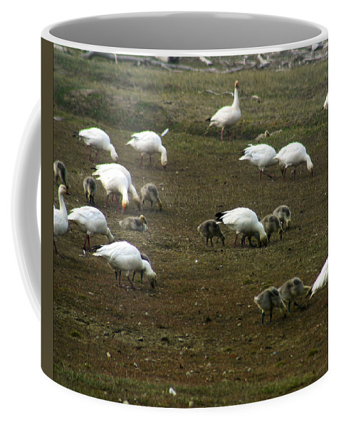 Snow Geese Coffee Mug featuring the photograph Snow Geese by Anthony Jones