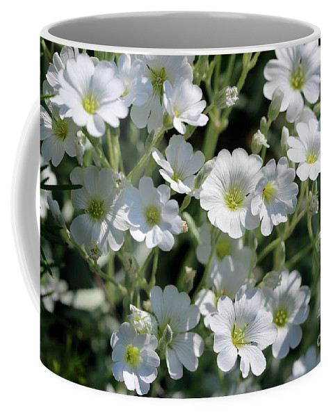 Snow-in-summer Coffee Mug featuring the photograph Snow In Summer Flowers by Karen Adams