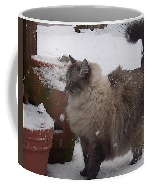 Cats Coffee Mug featuring the photograph Snow Kitty by Debbi Granruth