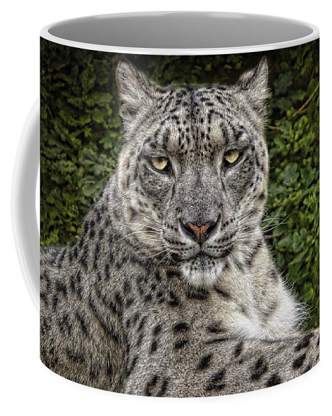Snow Leopard Coffee Mug featuring the photograph Snow Leopard by Chris Lord