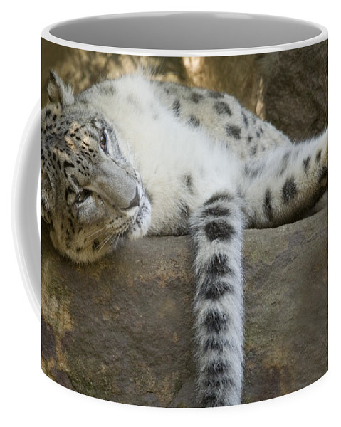 Snow Leopard Coffee Mug featuring the photograph Snow Leopard Nap by Mike Dawson