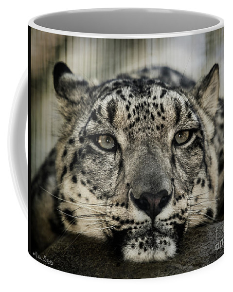 Lions Coffee Mug featuring the photograph Snow Leopard Upclose by Julian Starks
