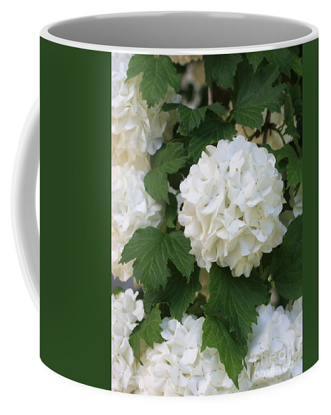 Snowball Tree Coffee Mug featuring the photograph Snowball Tree With Delicate Leaves by Carol Groenen