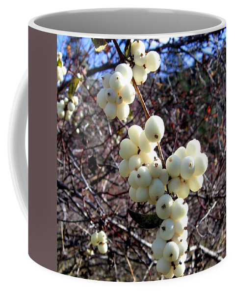 Autumn Coffee Mug featuring the photograph Snowberries by Will Borden