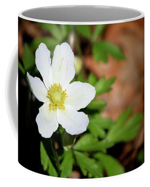 Snowdrop Coffee Mug featuring the photograph Snowdrop Anemone by Teresa Mucha