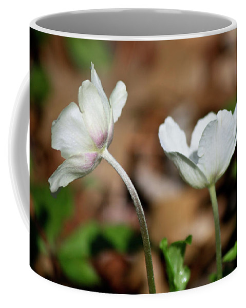 Snowdrop Coffee Mug featuring the photograph Snowdrop Anemones by Teresa Mucha
