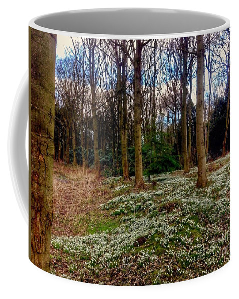 Snowdrops Coffee Mug featuring the photograph Snowdrop Woods 2 by Joan-Violet Stretch