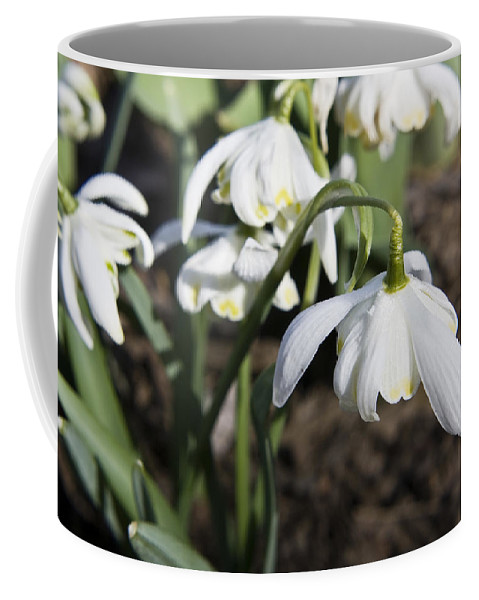 Snowdrops Coffee Mug featuring the photograph Snowdrops by Teresa Mucha
