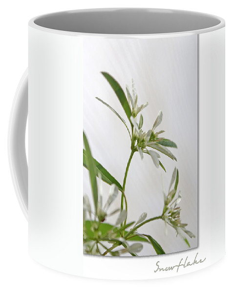 Flower Coffee Mug featuring the photograph Snowflake by Holly Kempe