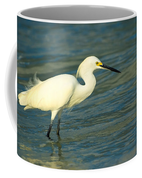 Animal Coffee Mug featuring the photograph Snowy Egret by Rich Leighton