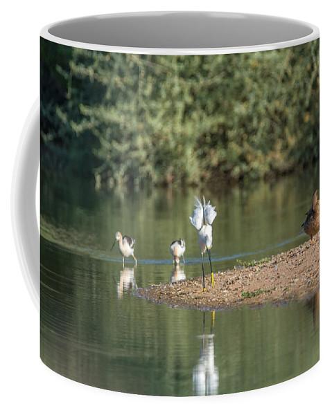 Snowy Coffee Mug featuring the photograph Snowy Egret Stretch 4280-080917-1 by Tam Ryan