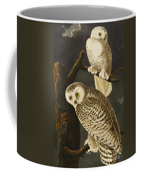 Snowy Owl (nyctea Scandiaca) Plate Cxxi From 'the Birds Of America' (aquatint & Engraving With Hand-colouring) By John James Audubon (1785-1851) Coffee Mug featuring the drawing Snowy Owl by John James Audubon
