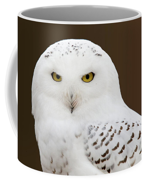 Snowy Owl Coffee Mug featuring the photograph Snowy Owl by Steve Stuller